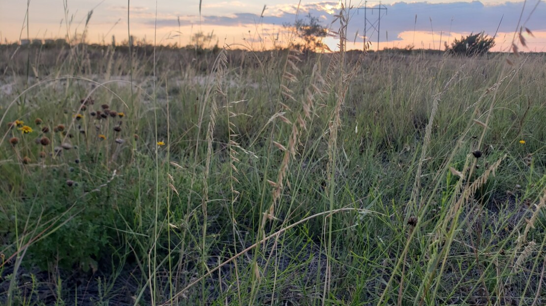 9 - Irion County, TX Land and Ranch For Sale